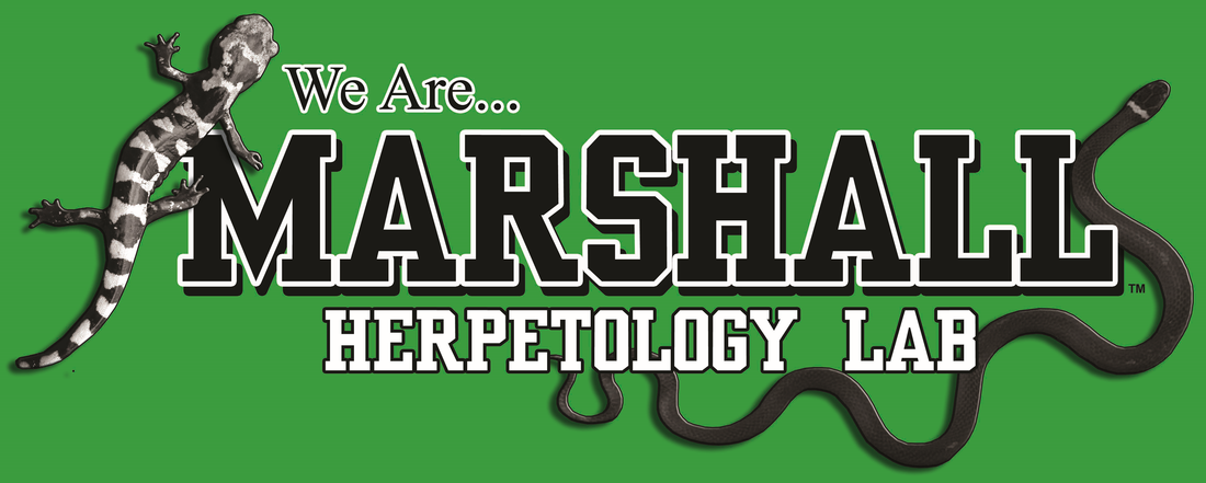 Marshall University Herpetology and Applied Conservation Lab